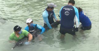 delfin_varado_yuc1