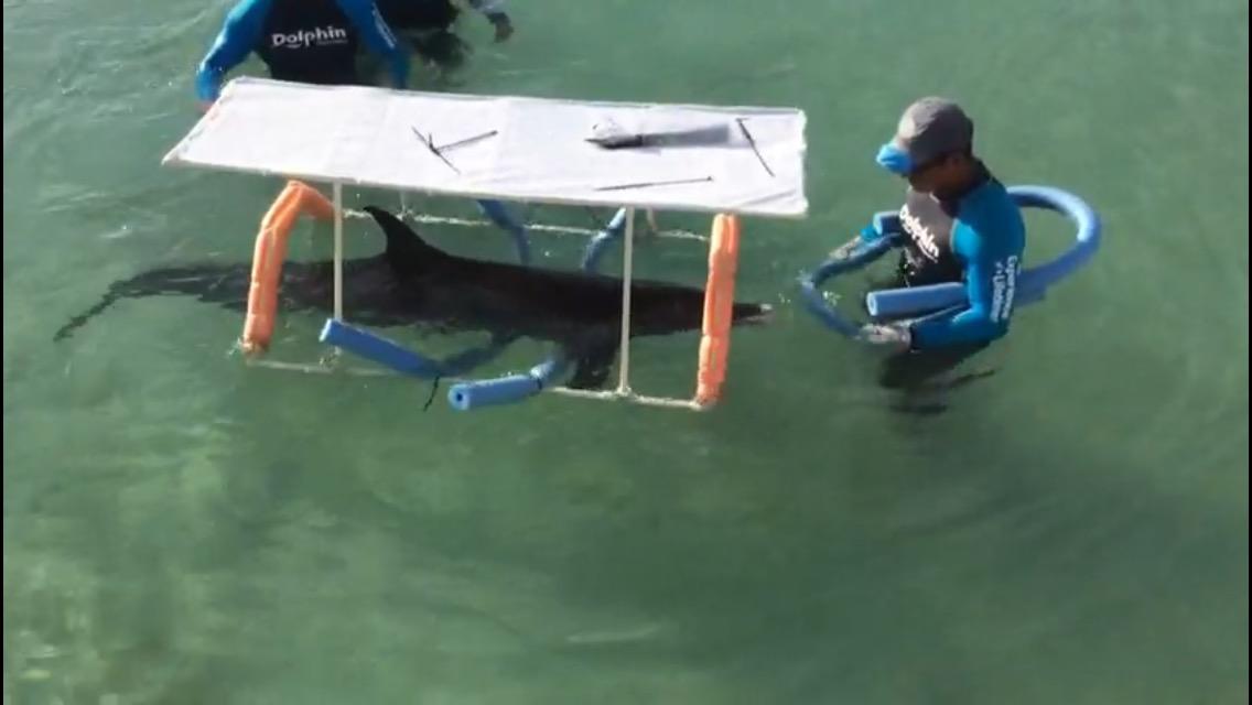 'Delicado pero estable' delfín que varó en Yucatán