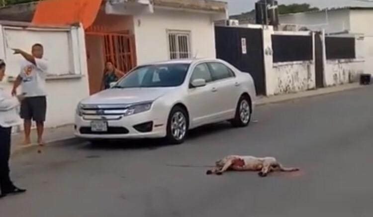 Luchan contra otro tipo de violencia en QRoo