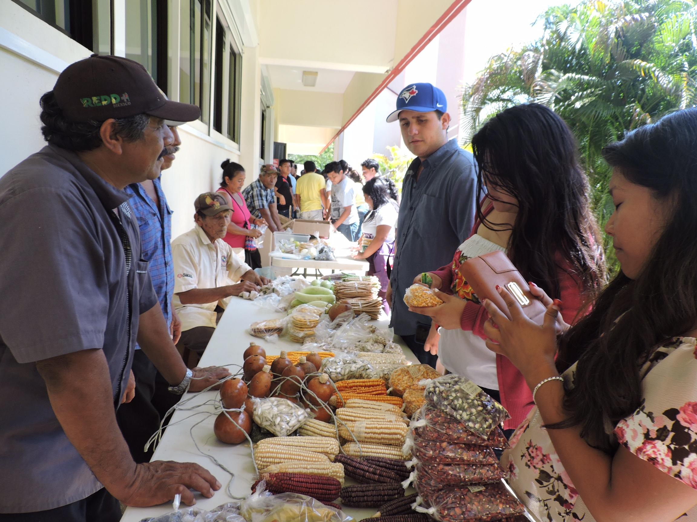 Con enfoque maya, celebran Día Nacional del Maíz
