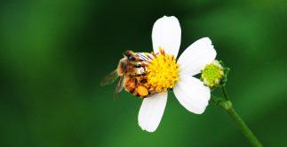 abejas contexto miel