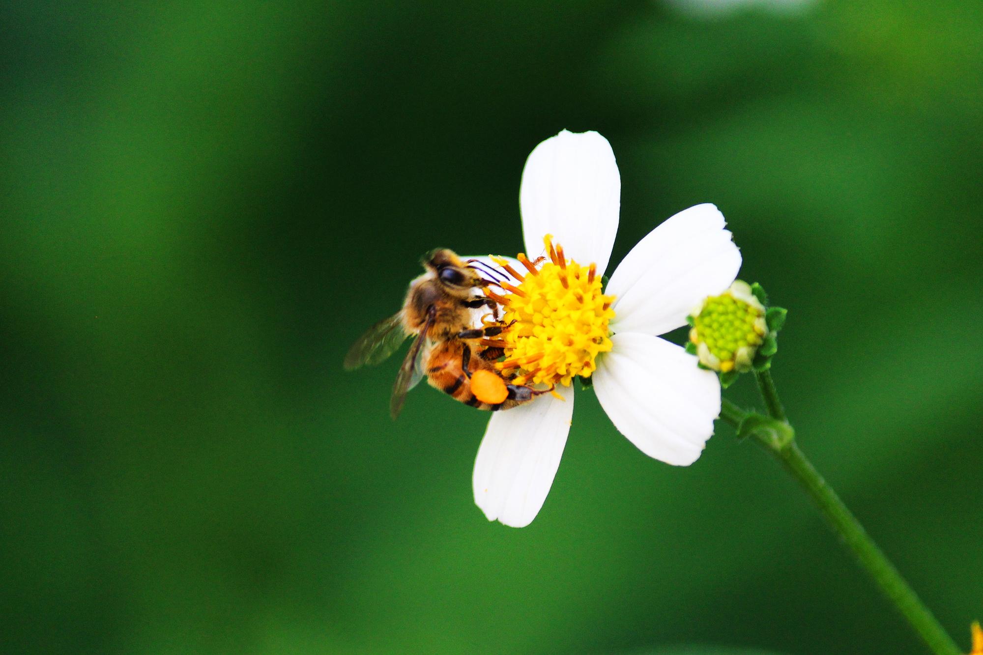 Miel melipona y otros 3 remedios caseros contra la conjuntivitis