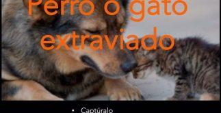 animales_extraviados