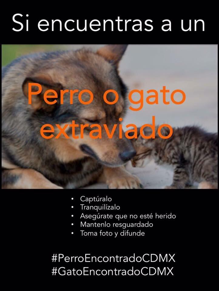 Mascotas extraviadas también son víctimas del sismo (fotos)