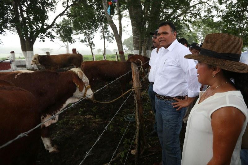 Otro plan de cuencas lecheras en Yucatán