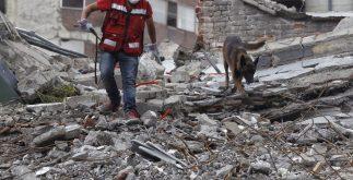 """MEX45. CIUDAD DE MÉXICO (MÉXICO), 21/09/2017.- El perro mexicano """"Chichí"""", que logró identificar el sitio exacto de personas con vida cuando ya se había abandonado la búsqueda en un edificio colapsado, camina junto a su entrenador hoy, jueves 21 de septiembre de 2017, en Ciudad de México (México), tras el sismo de magnitud 7,1 en la escala de Richter, que sacudió fuertemente la capital mexicana este martes 19 de septiembre, justo cuanto se cumplían 32 años del poderoso terremoto que provocó miles de muertes en 1985. EFE/Sáshenka Gutiérrez"""