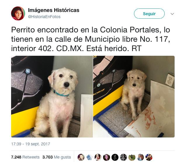 terremoto_perros1
