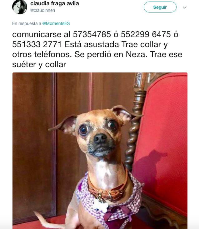 terremoto_perros3