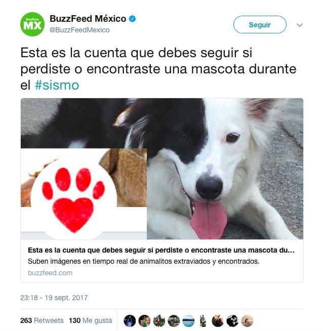 terremoto_perros4