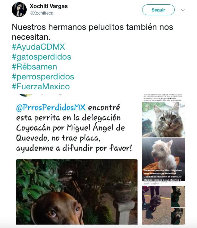 terremoto_perros6