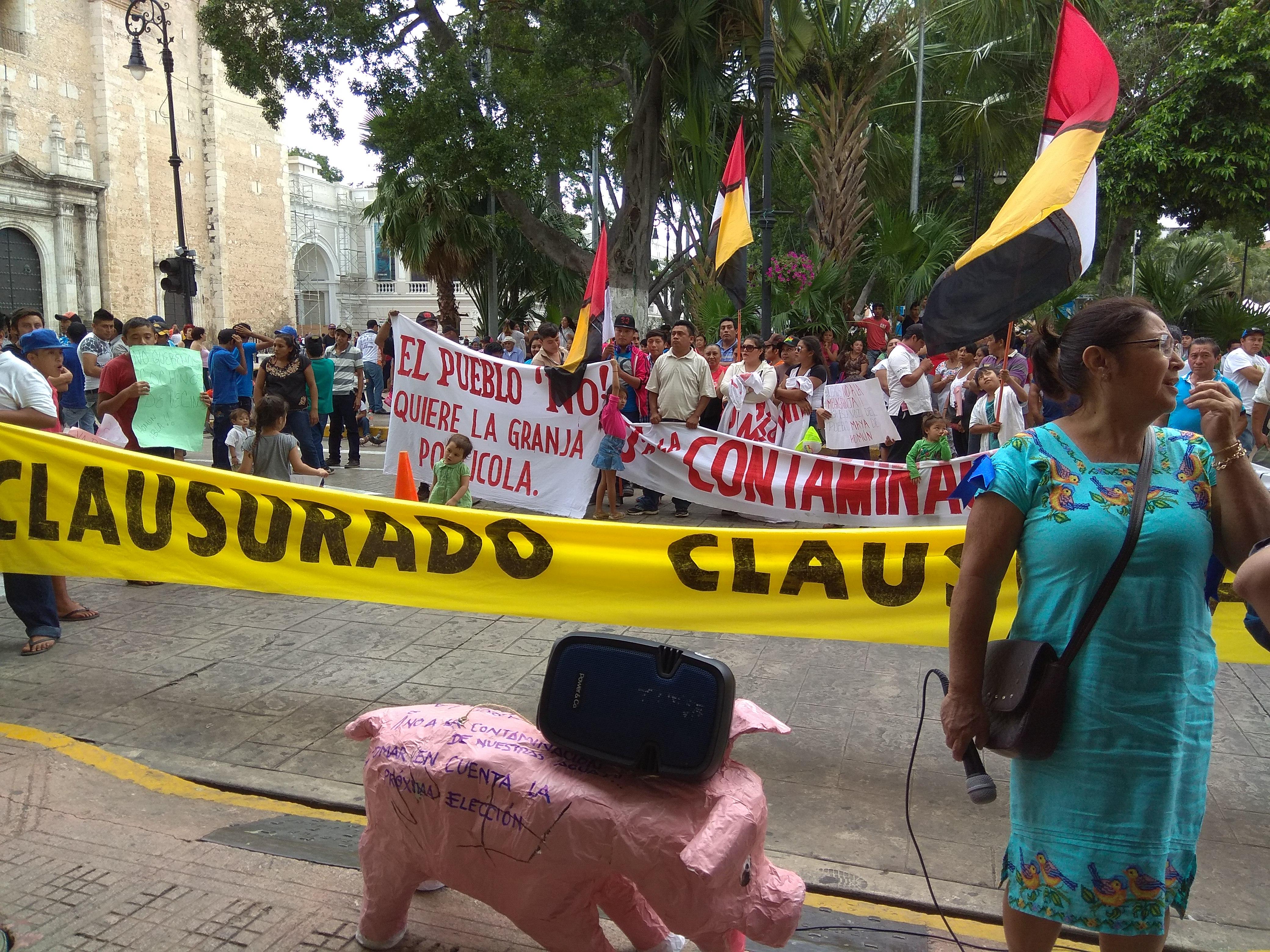 'Sube' reclamo contra mega granja porcícola en Homún