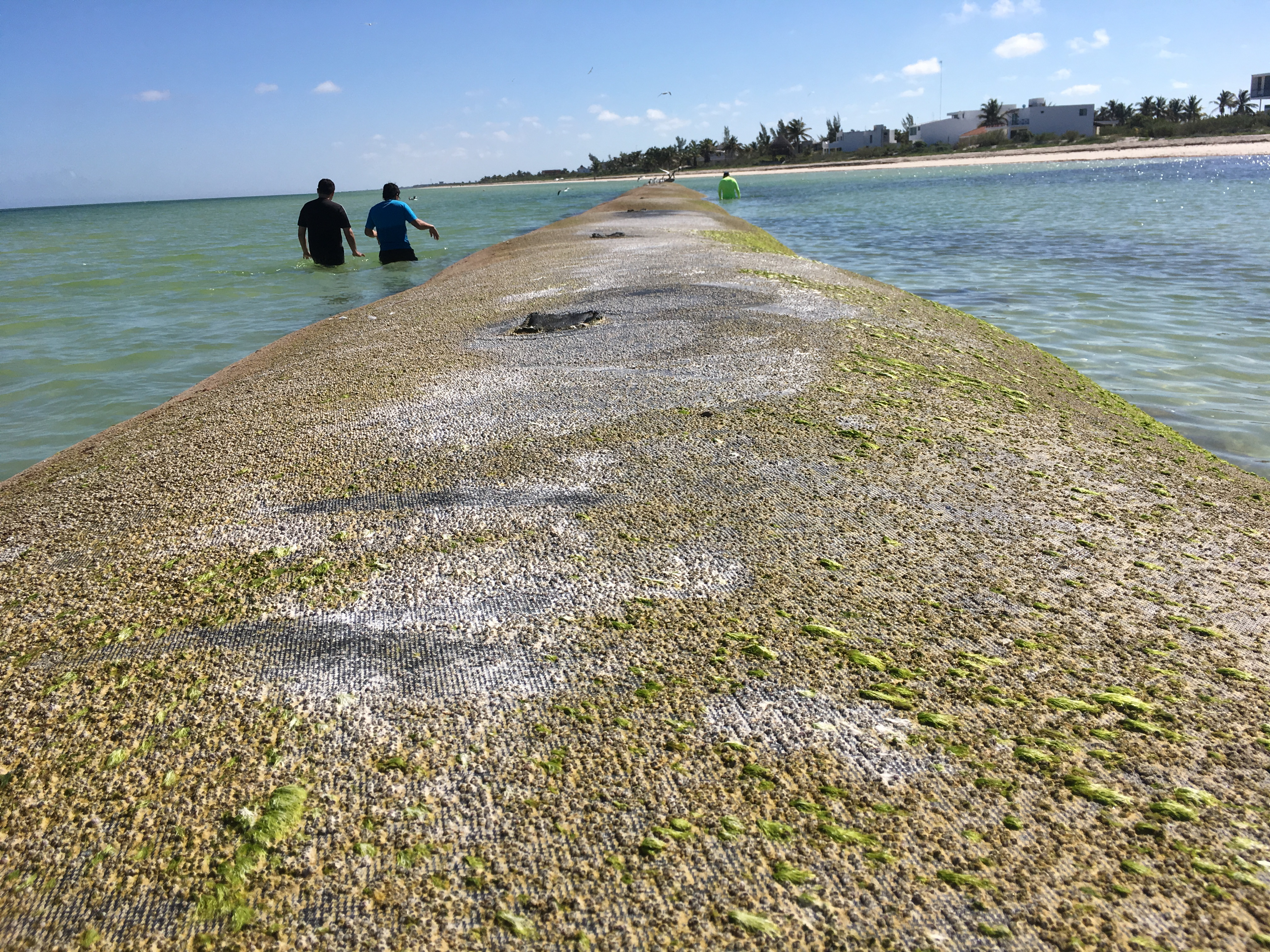 Desarrollan alternativa para mitigar erosión costera