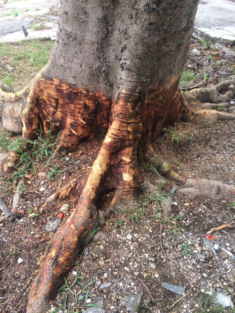 Nuevas estrategias para matar a los árboles