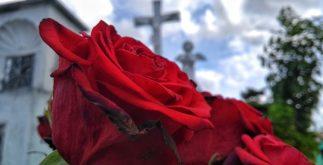 Rosas rojas, en cementerio de Mérida