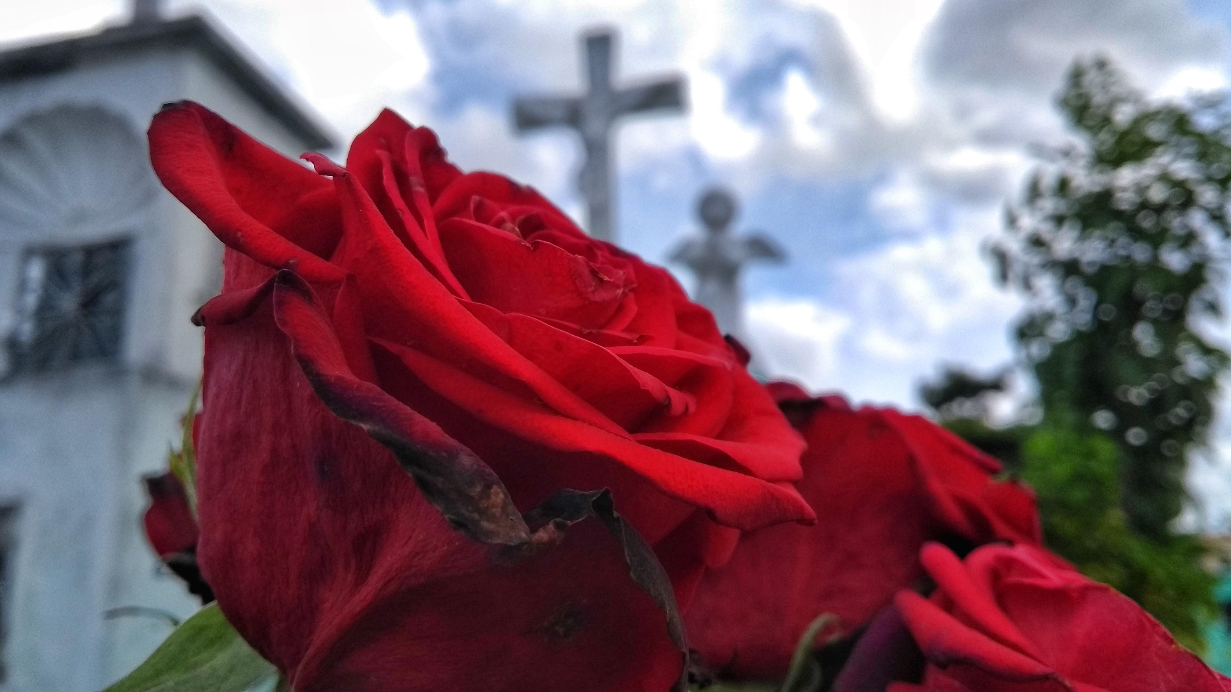 Día de Muertos: Los vivos llegan a cementerios a limpiar las tumbas (videos)