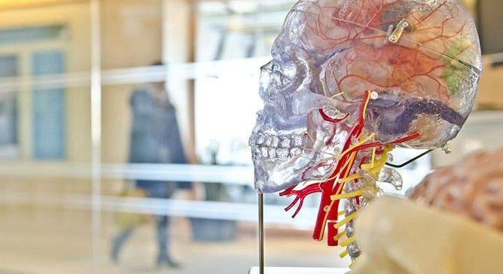 internet-cerebro