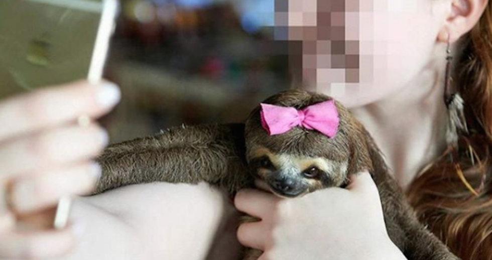 """""""Selfies"""" con animales salvajes, una crueldad"""