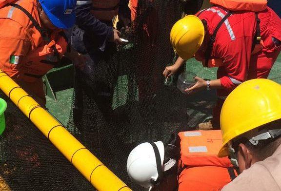 Urge personal especializado en hidrocarburos y aerogeneradores.- ITPE