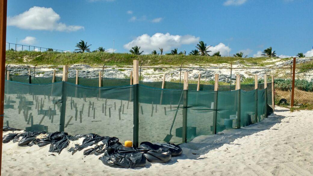Proyecto hotelero en Playa Delfines abre nuevo frente en Cancún