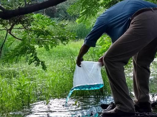 Cultivan 200 mil peces Gambusia para combatir moscos
