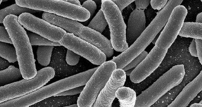 microbios_cuerpo1
