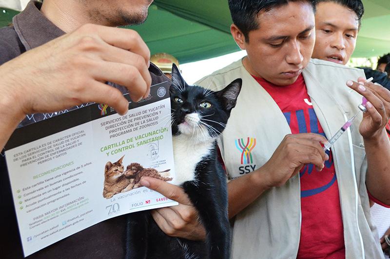 <i>Mueren</i> 2 males en México; Yucatán, clave para eliminar rabia (video)