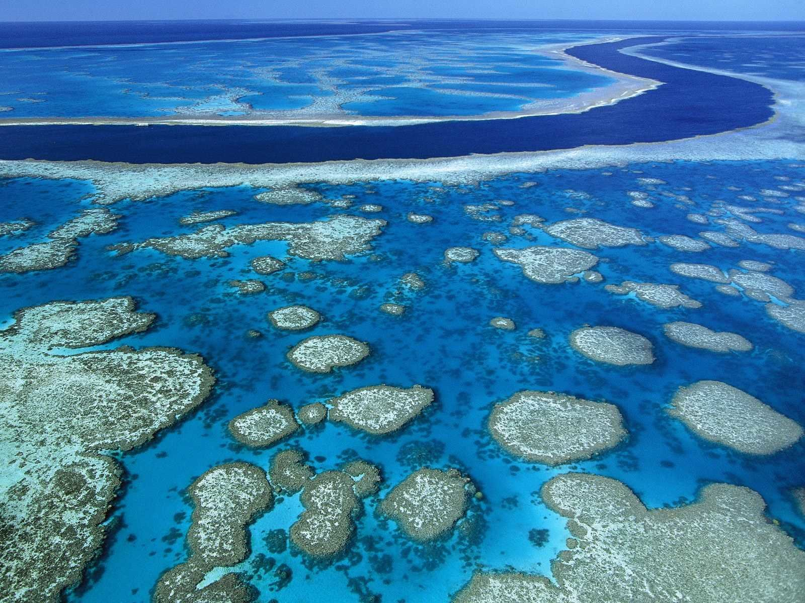 Denuncia ONU perdida de la mitad de arrecifes de coral del mundo