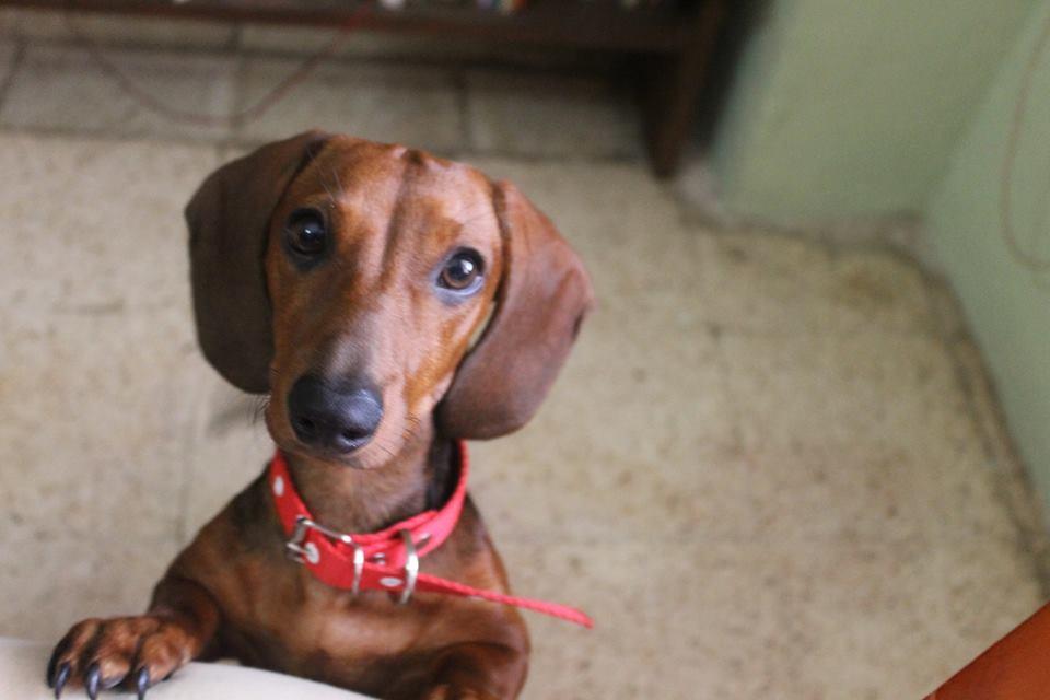 5 remedios para que tu perro no sufra por la pirotecnia (video)