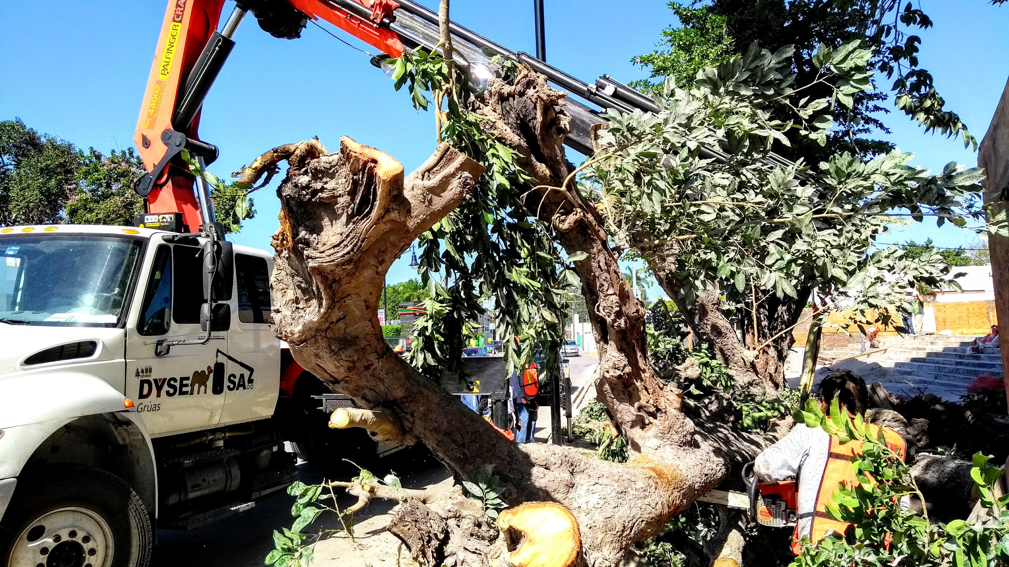 Rescatan árbol en obra del Centro de Congresos; mueren 5 (video)