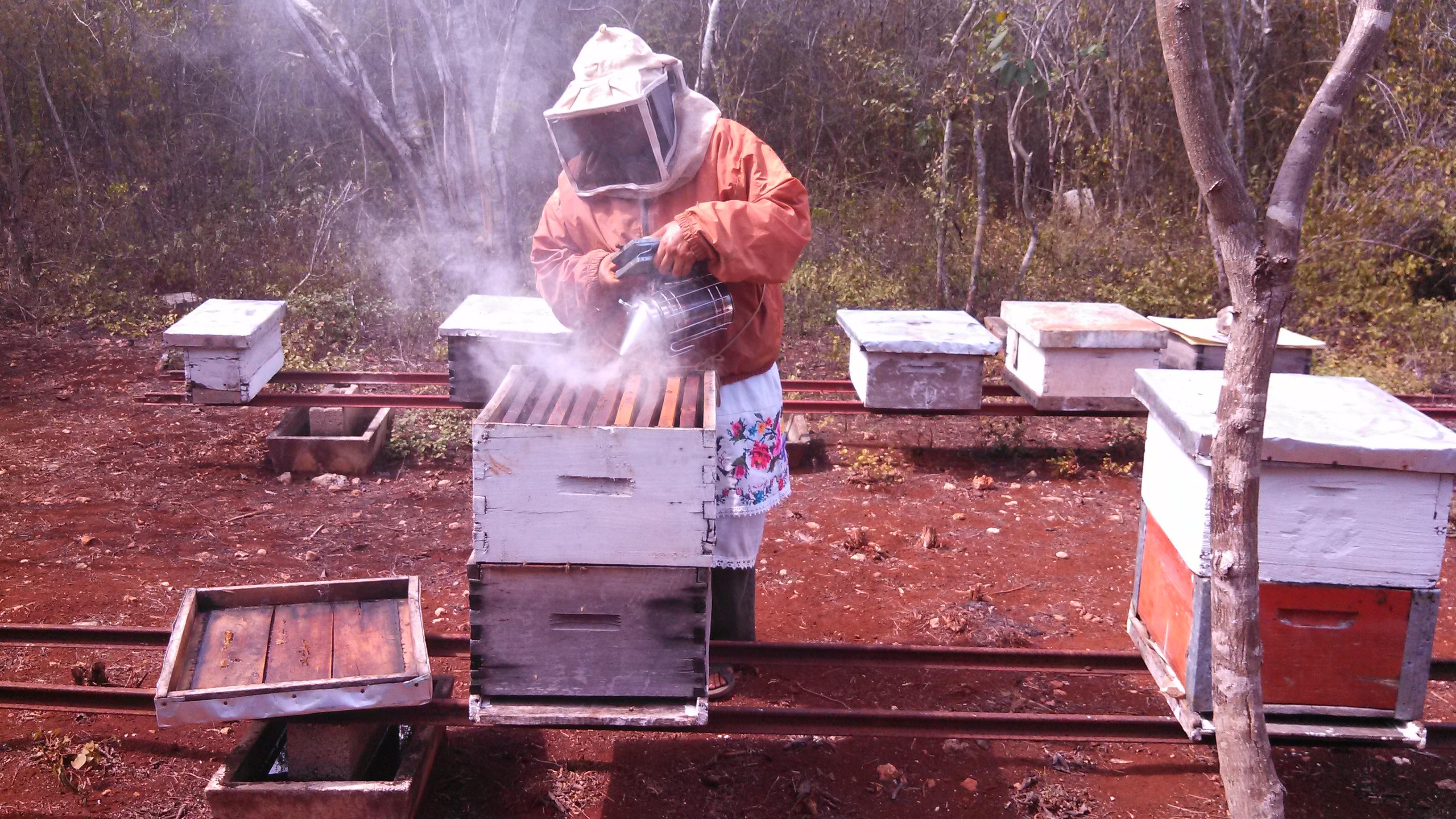 Cosecha de miel mexicana alcanzó casi 51 mil toneladas en 2017