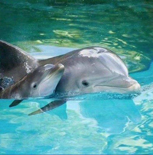Estudio mundial en delfines incluirá a Caribe Mexicano