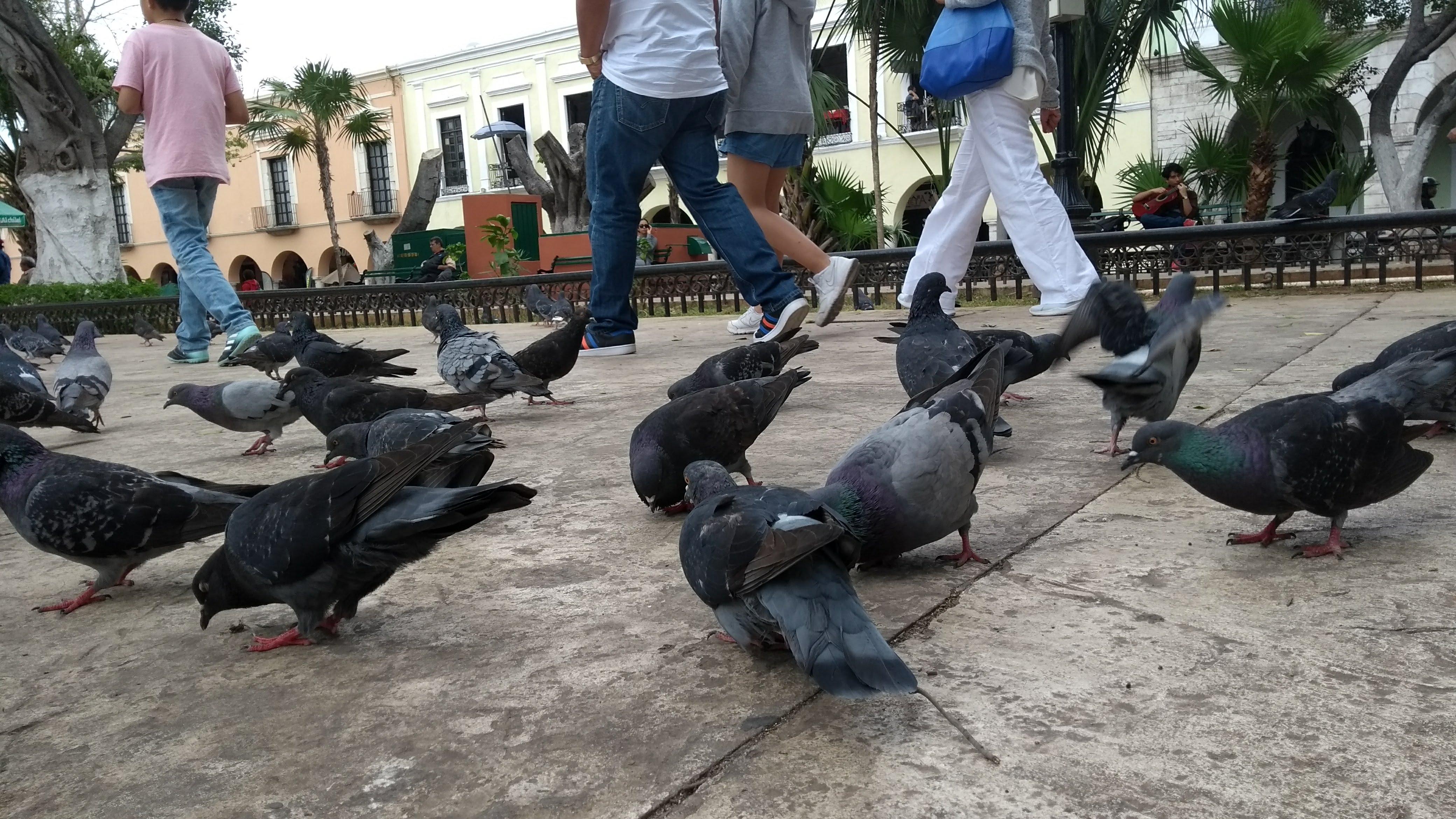 Progresivo deterioro en Mérida por ruido, heces y otros contaminantes
