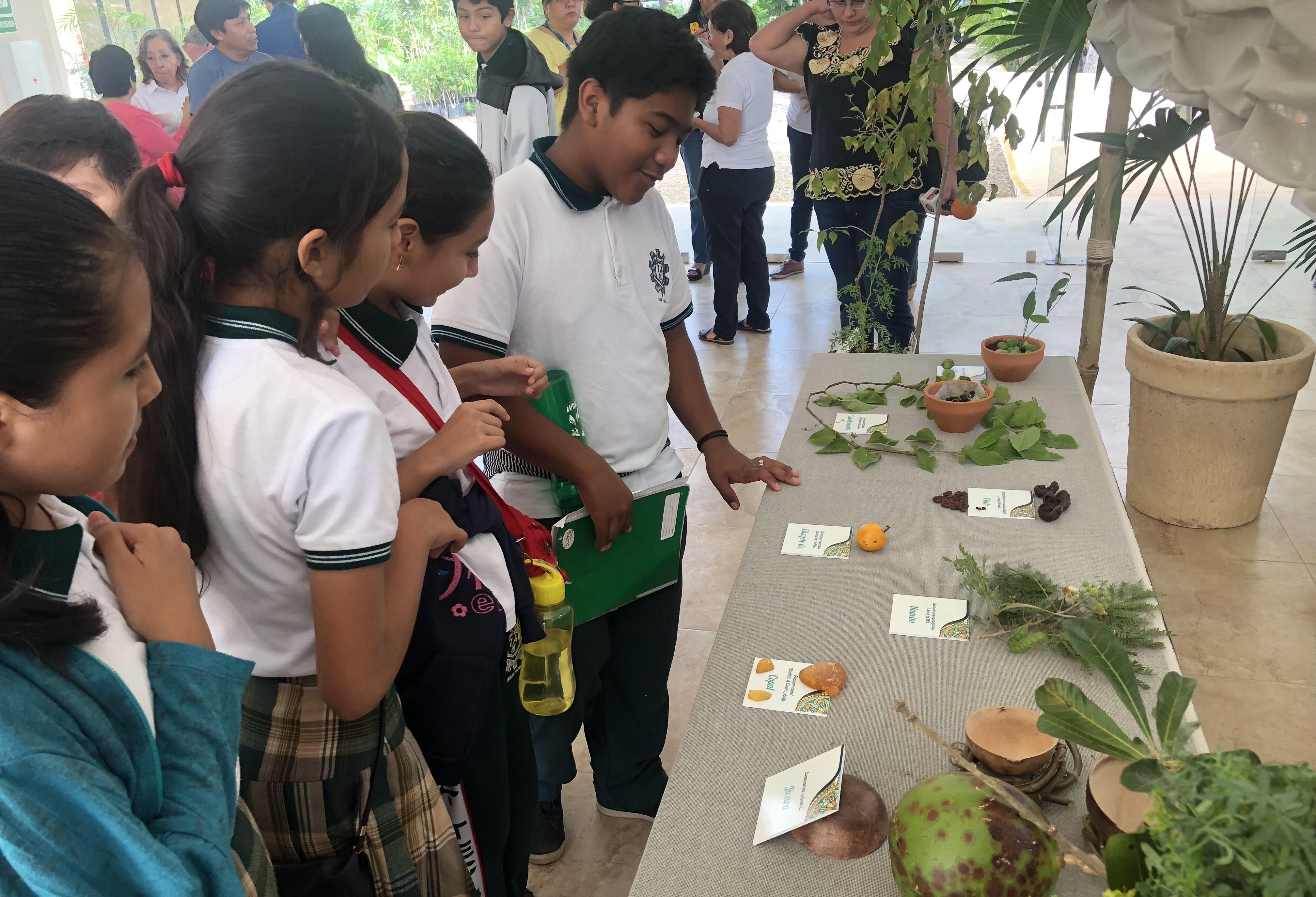 """En exhibición plantas para curar """"mal de amores"""" entre los mayas"""