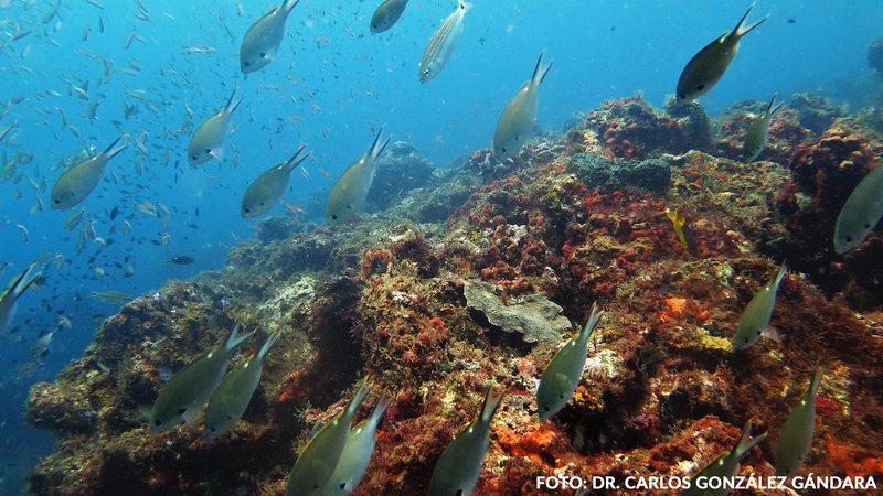 Anuncian hallazgo de nuevos arrecifes en el Golfo de México