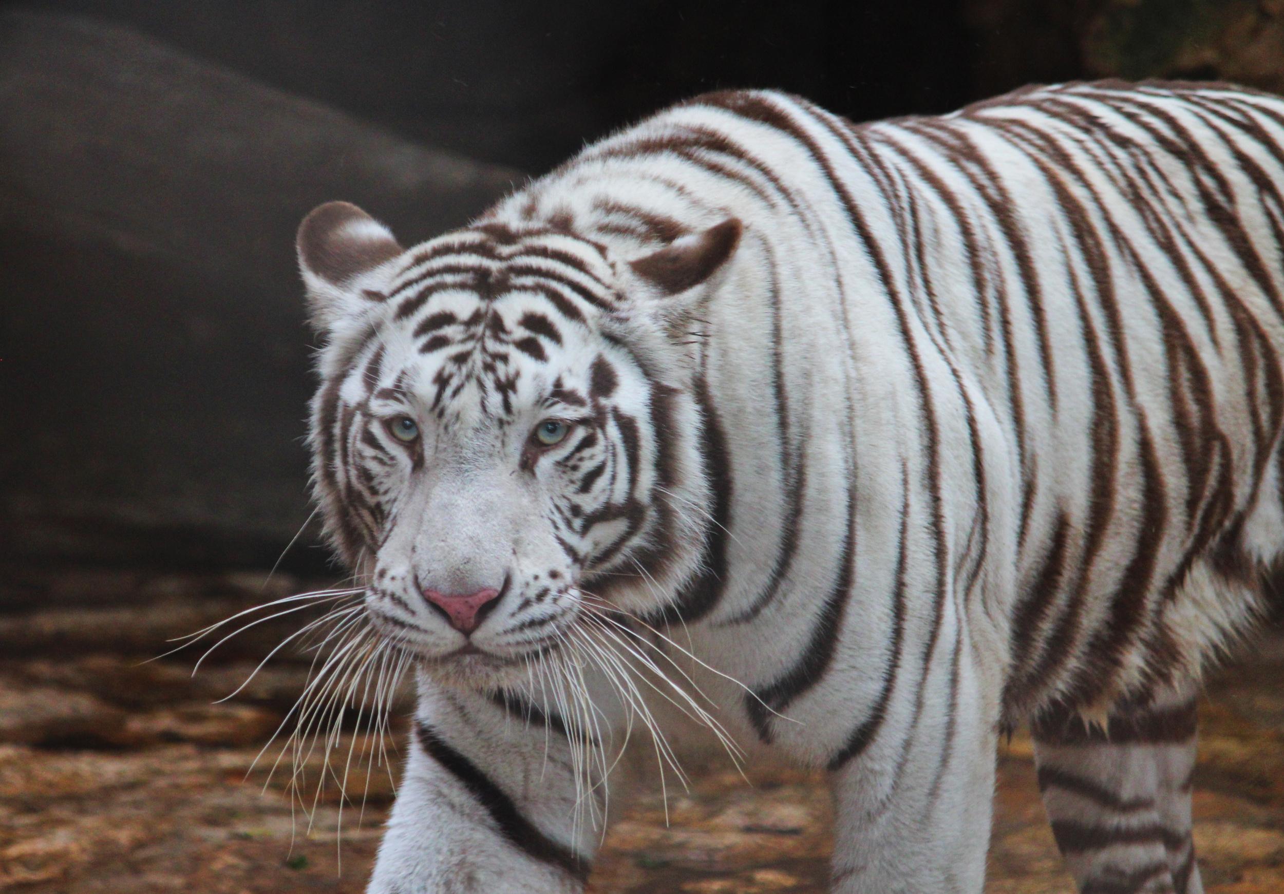 Esto es lo nuevo del zoológico del Centenario, en Mérida (videos y fotos)