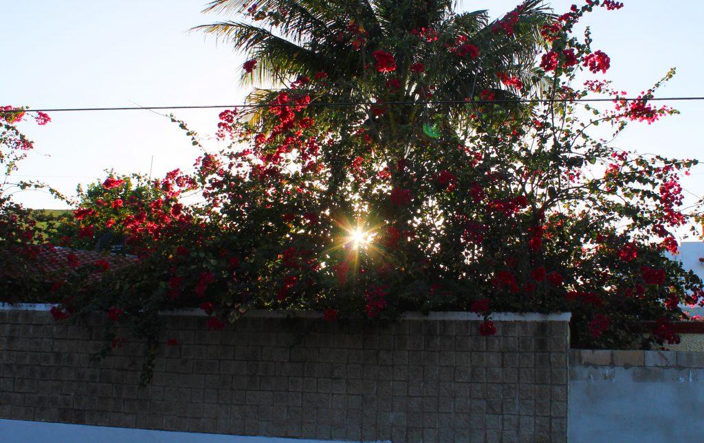Flores adornan las casas