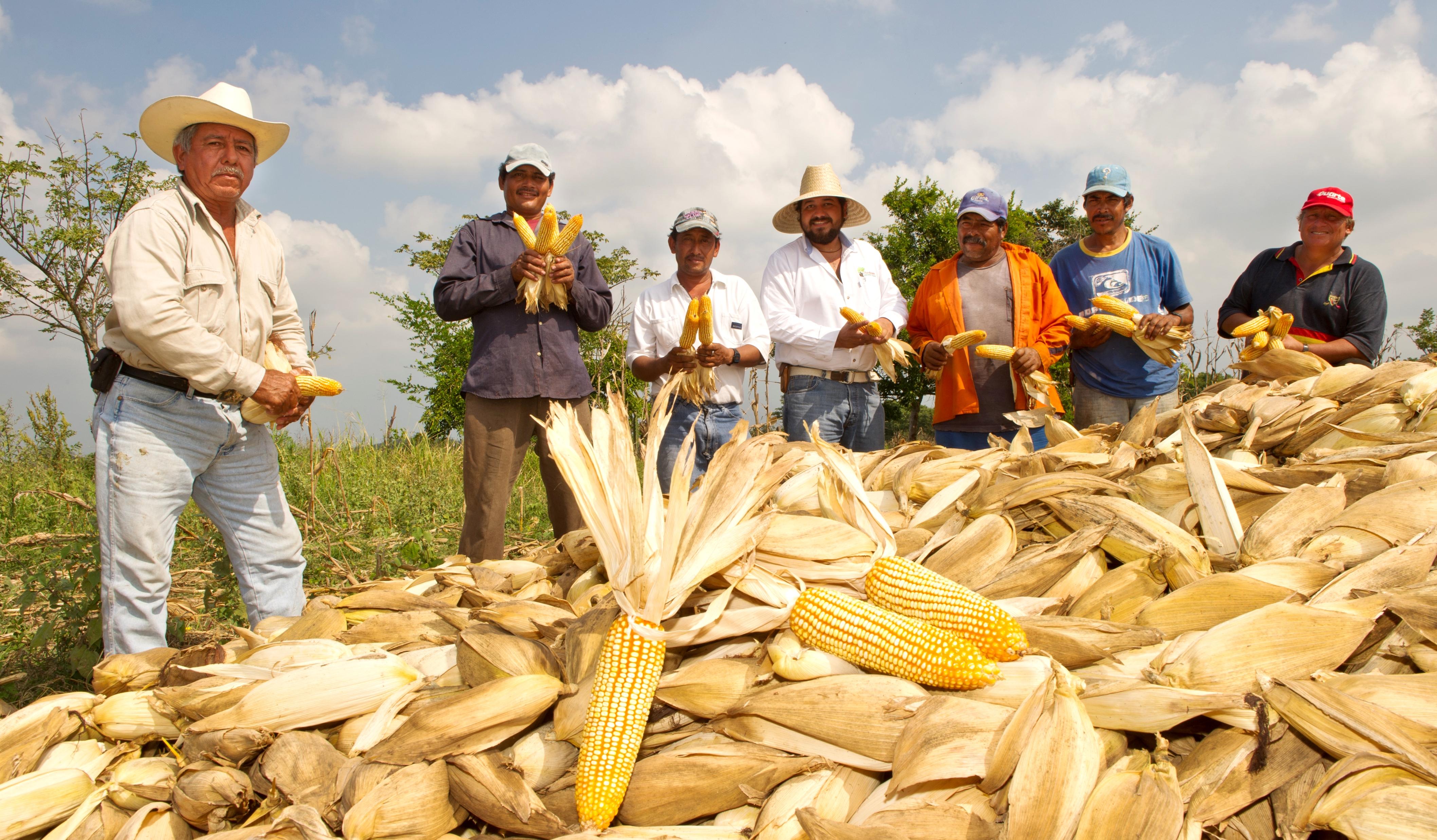 Al campo mexicano le iría mejor sin el TLCAN