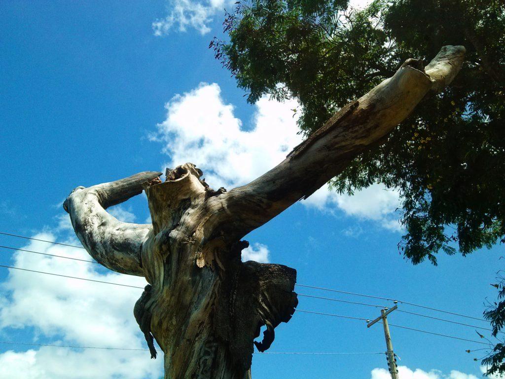 Árboles muertos en vía pública de Mërida