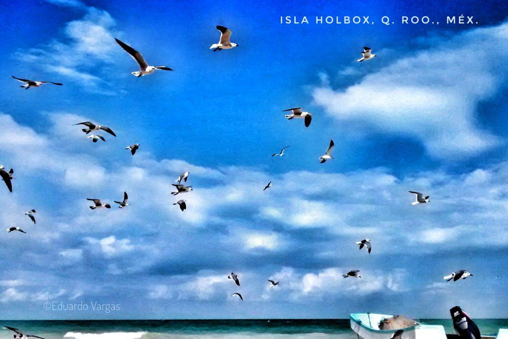El Festival de las Aves, en Holbox, dura 3 días. (Foto: Eduardo Vargas)