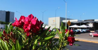 Las flores, de muchos colores, son signo de que la primavera está cerca: el 20 de marzo llega al hemisferio norte del planeta. (Foto: Eduardo Vargas /LECTORMX.com)
