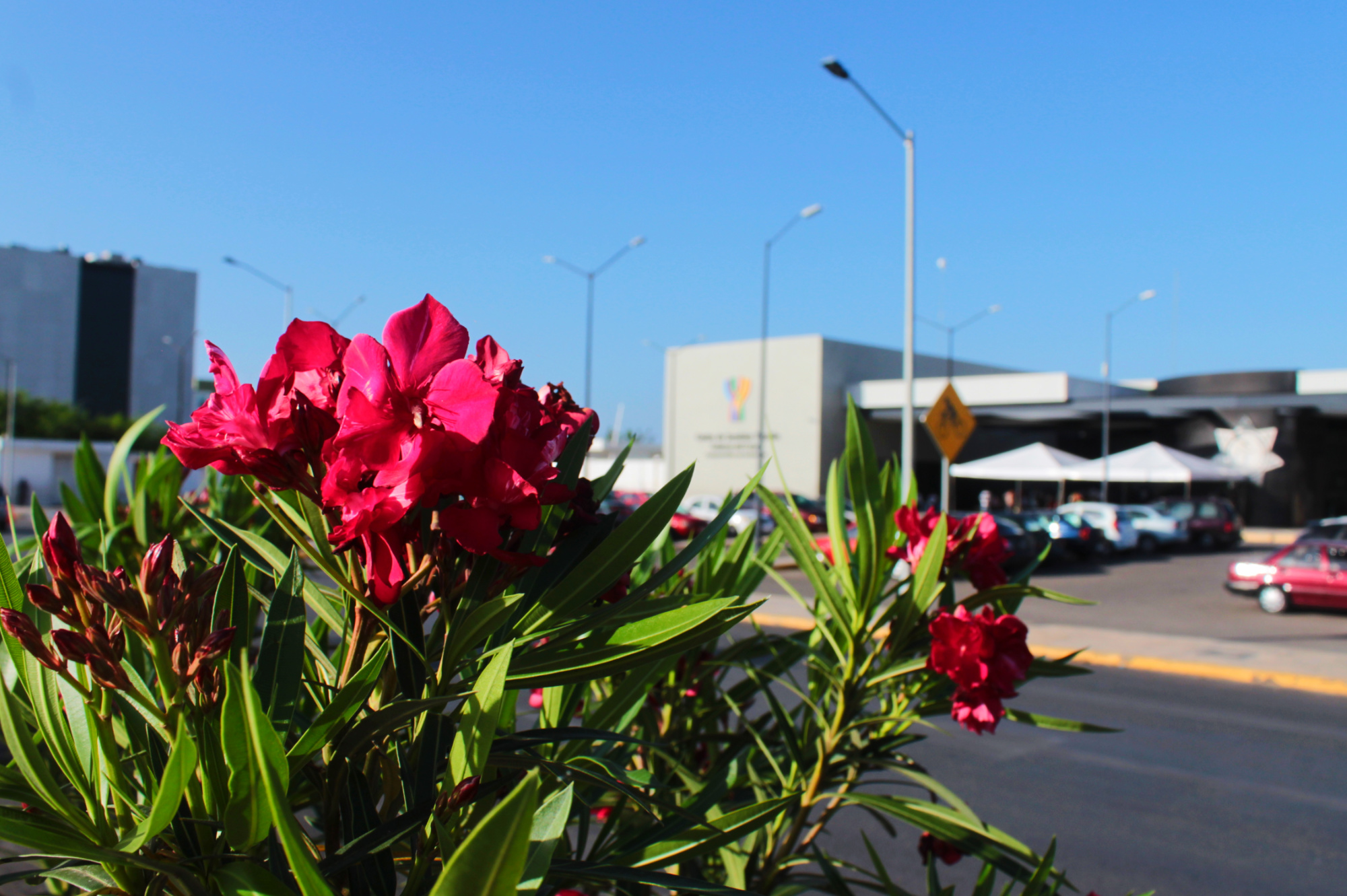 Estas fotos de Mérida te muestran que la primavera está cerca ¿cuándo empieza?