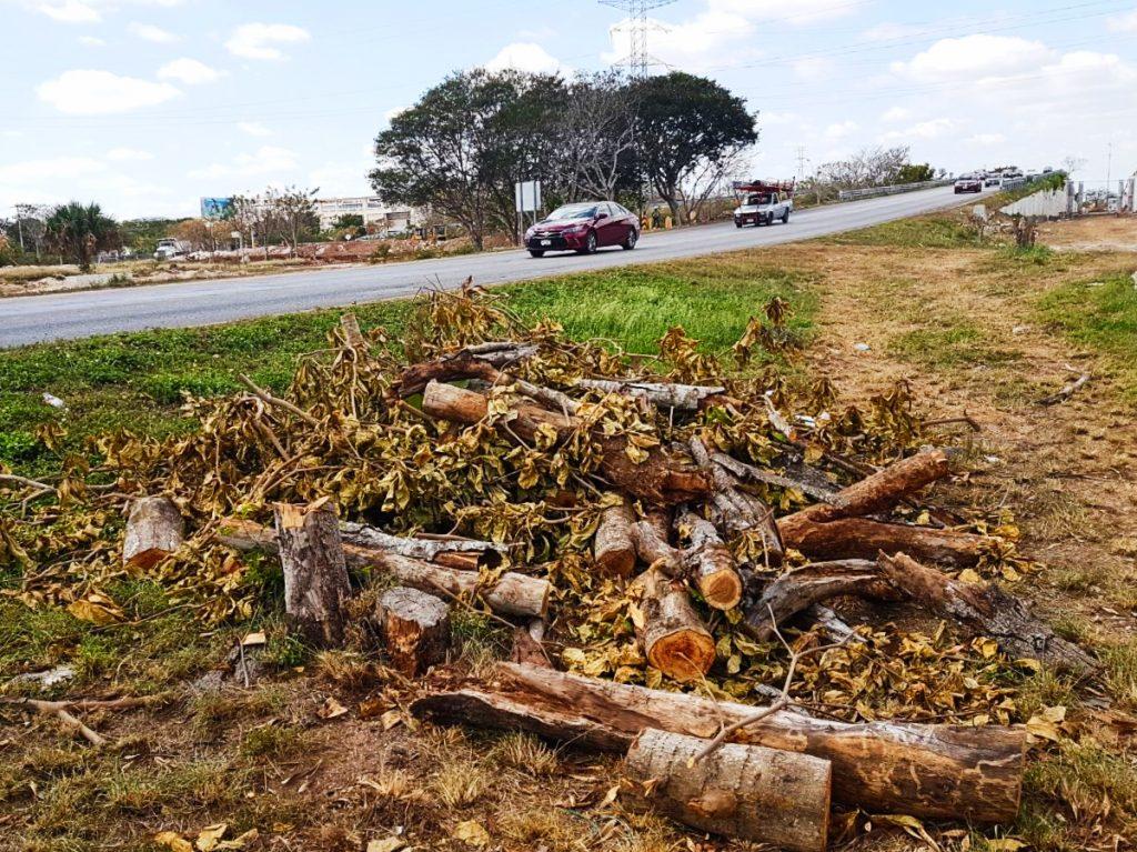 Según especialistas, los árboles pudieron haber sido rescatados.