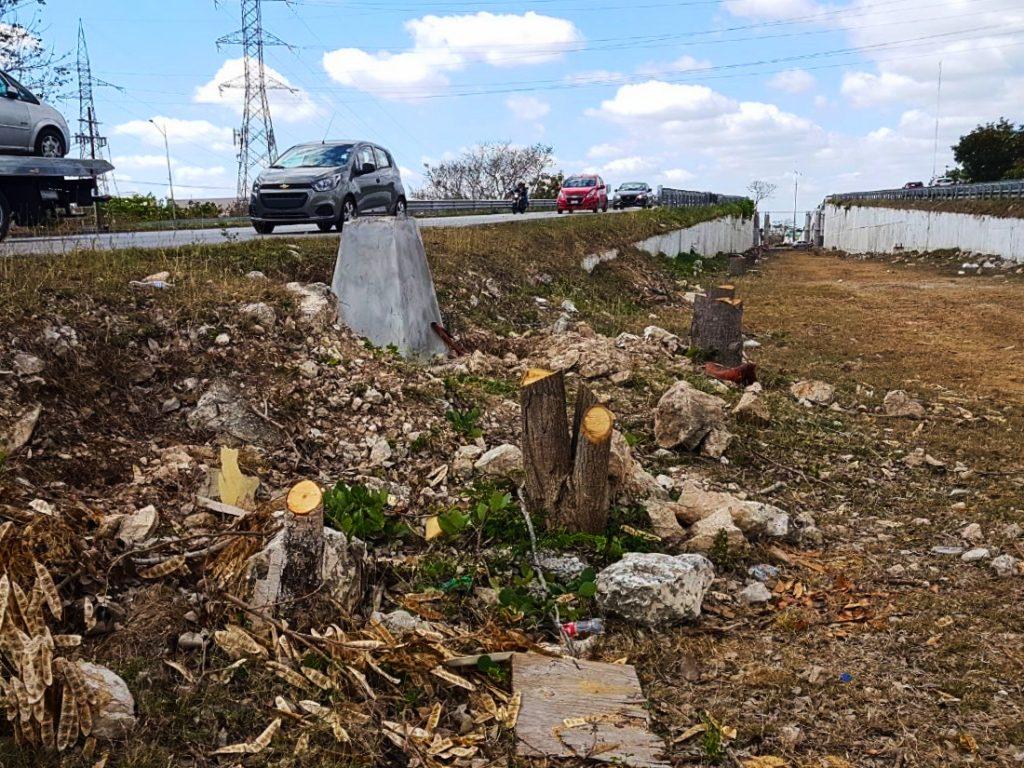Restos de los árboles cortados en paso a desnivel Mérida-Progreso permanecen el el área.