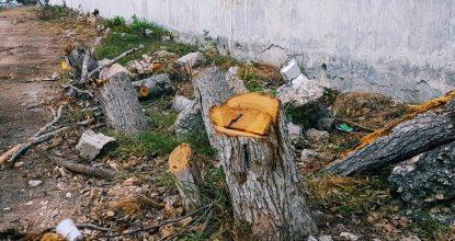 En las obras de modernización del libramiento en periférico con carretara Mérida Progreso se eliminaron más de 80 árboles.