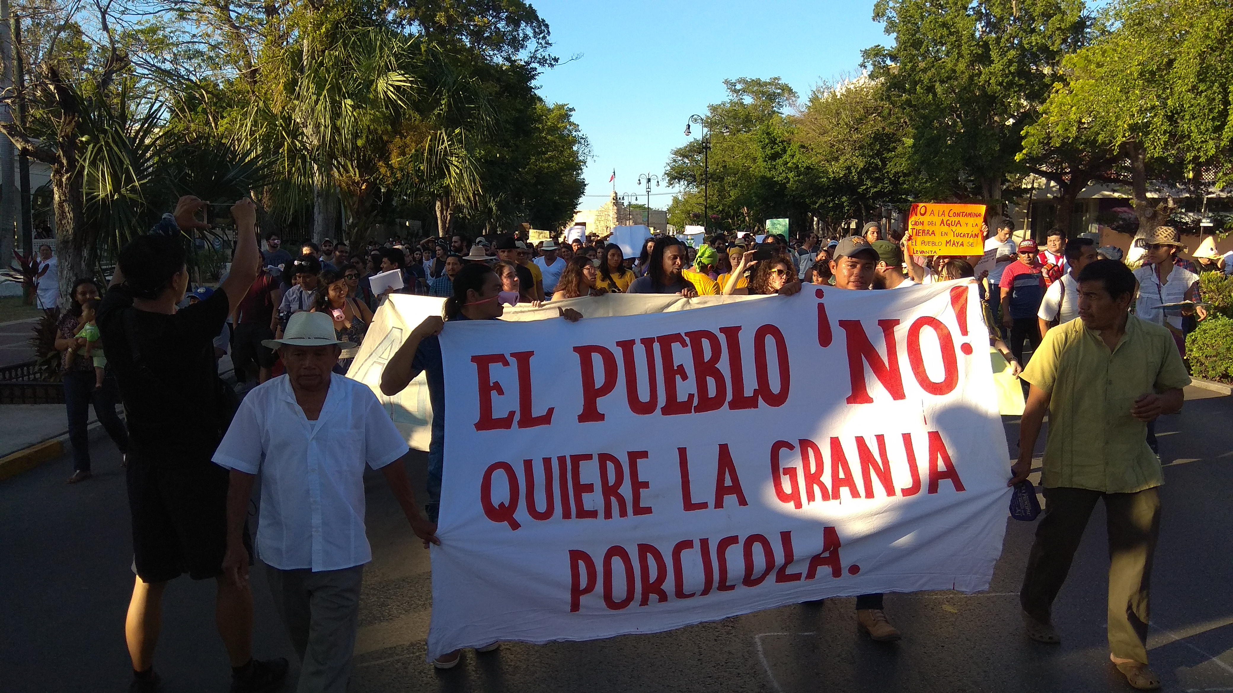 A favor de cenotes y contra mega proyecto porcícola en Homún