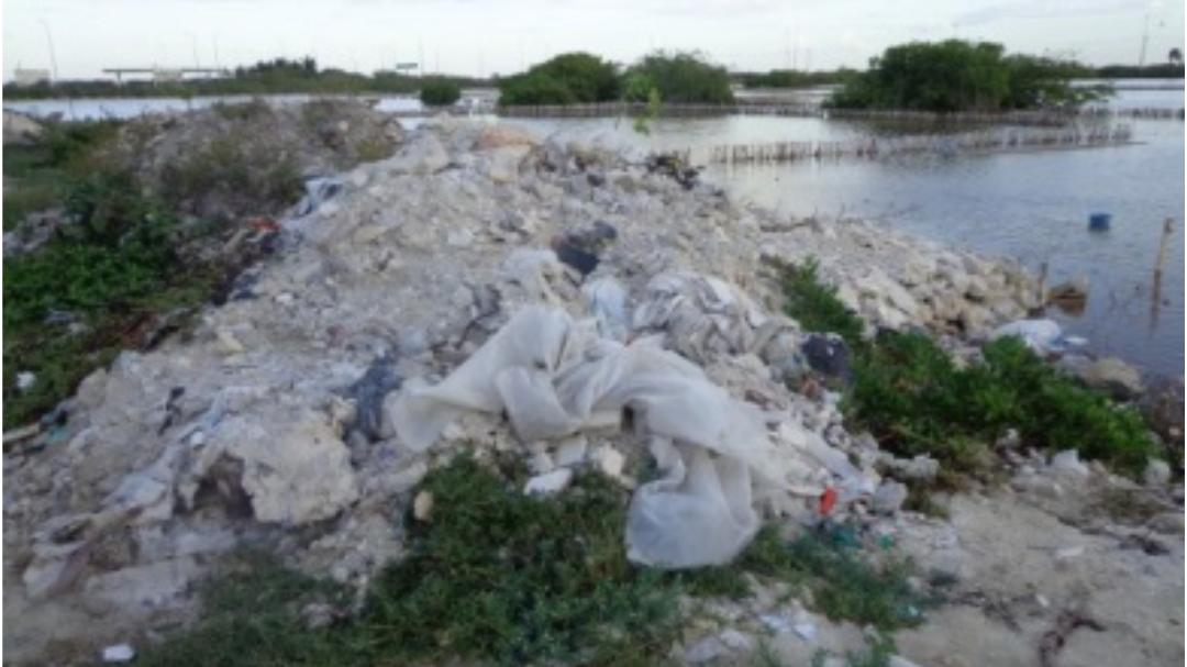 Clausuran obras por afectación a mangle