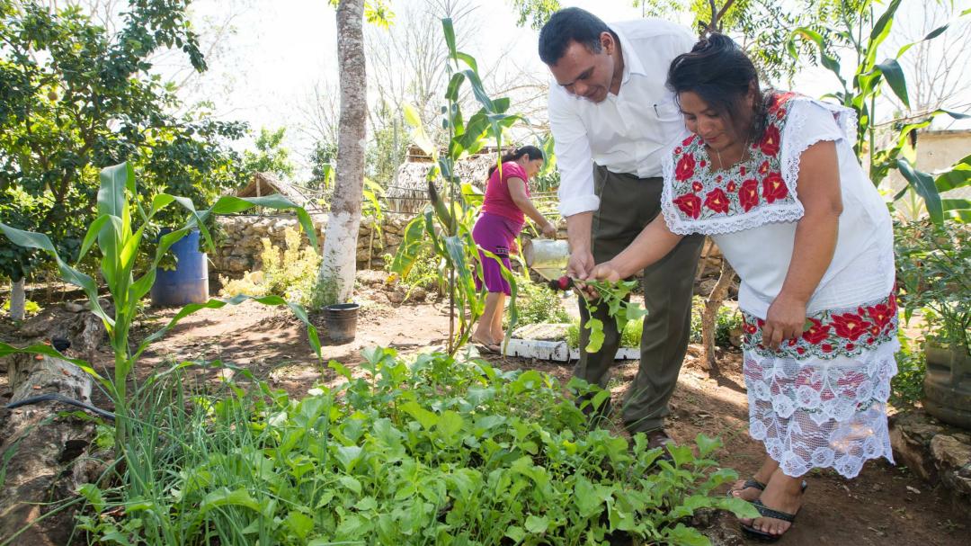 Huertos y créditos generan progreso en Yucatán: gobierno