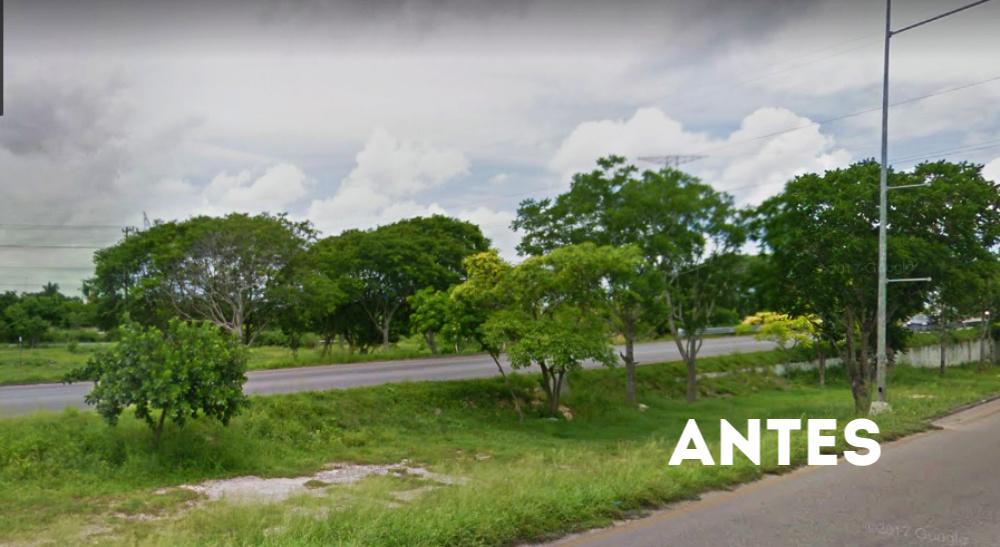 Toma 6 árboles google maps lista