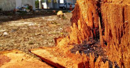 En el paso a desnivel de la carretera Mérida-Progreso, con periférico, se cortaron 89 árboles, algunos de especies protegidas. (Foto: Eduardo Vargas/LECTORMX.com)