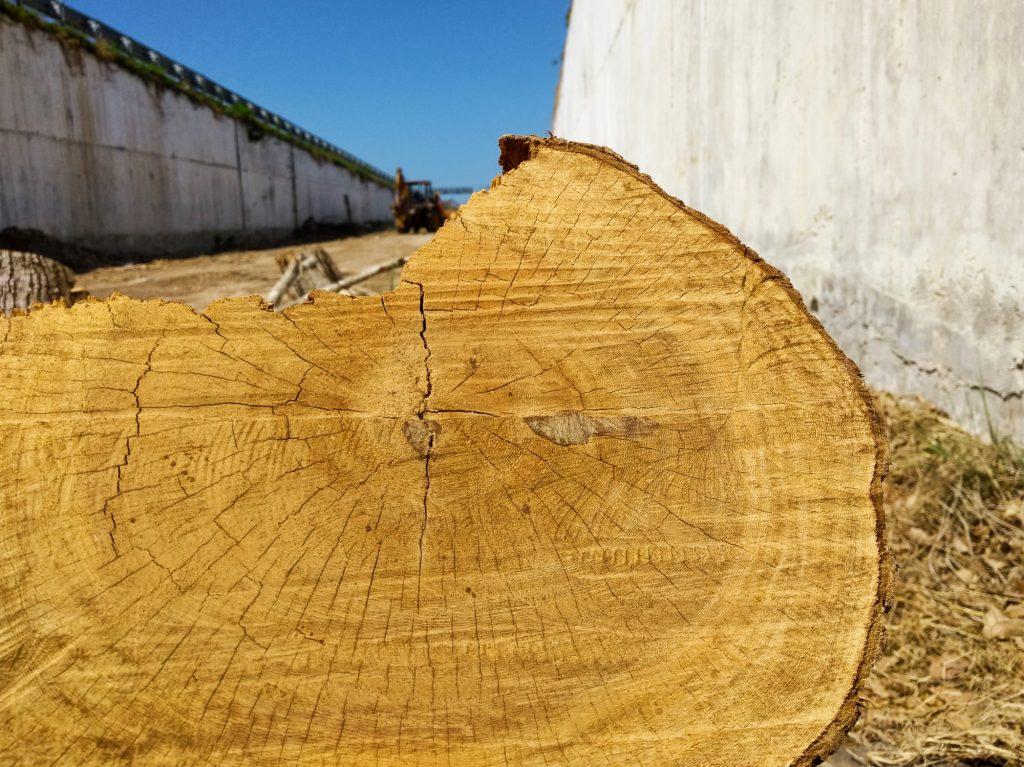 Árboles cortados en Mérida